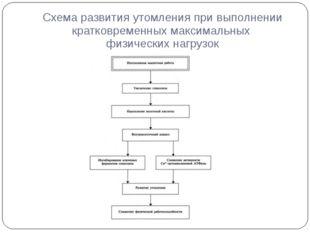 Схема развития утомления при выполнении кратковременных максимальных физическ