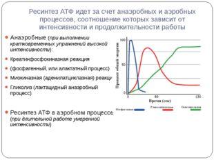 Ресинтез АТФ идет за счет анаэробных и аэробных процессов, соотношение которы
