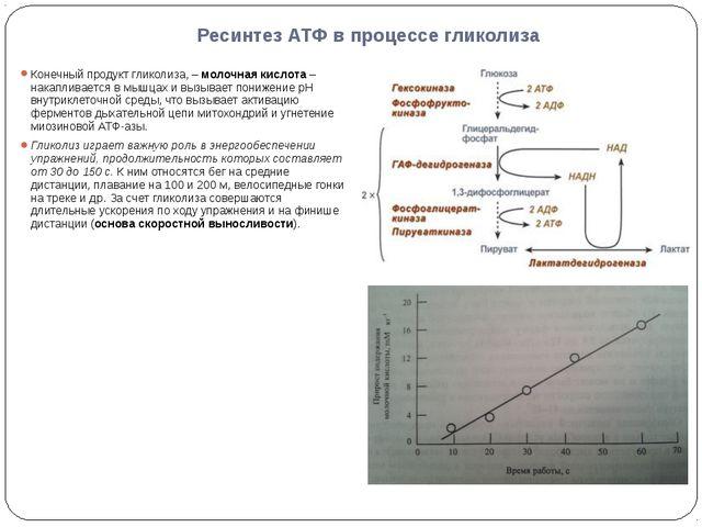 Ресинтез АТФ в процессе гликолиза Конечный продукт гликолиза, – молочная кисл...
