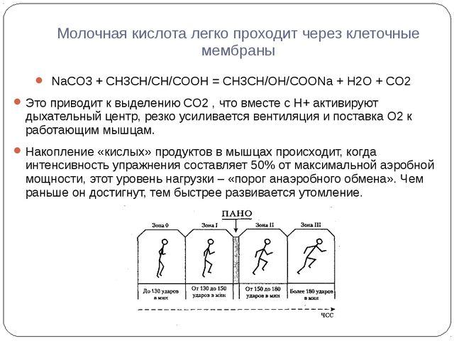 Молочная кислота легко проходит через клеточные мембраны NaCO3 + CH3CH/CH/COO...