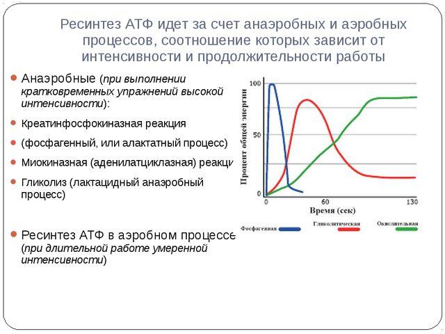 Ресинтез АТФ идет за счет анаэробных и аэробных процессов, соотношение которы...