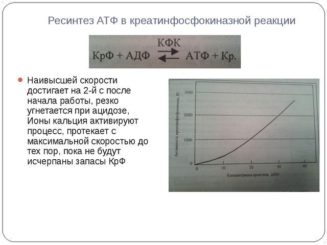 Ресинтез АТФ в креатинфосфокиназной реакции Наивысшей скорости достигает на 2...