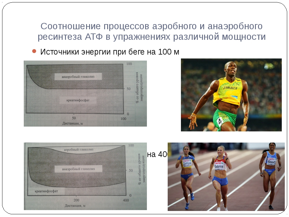 Соотношение процессов аэробного и анаэробного ресинтеза АТФ в упражнениях раз...