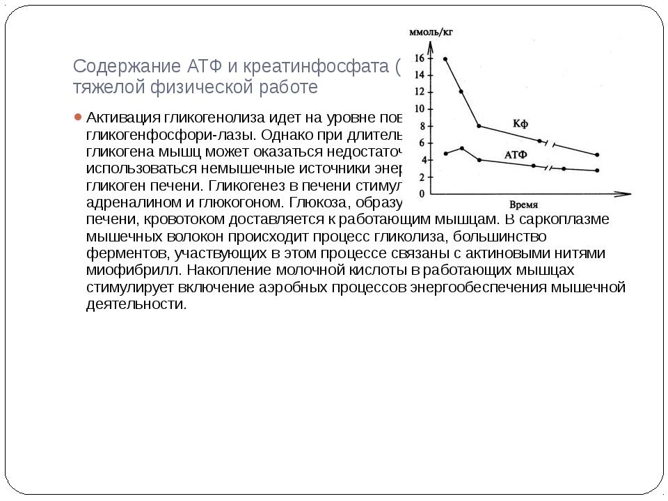 Содержание АТФ и креатинфосфата (Кф) в мышцах при тяжелой физической работе А...