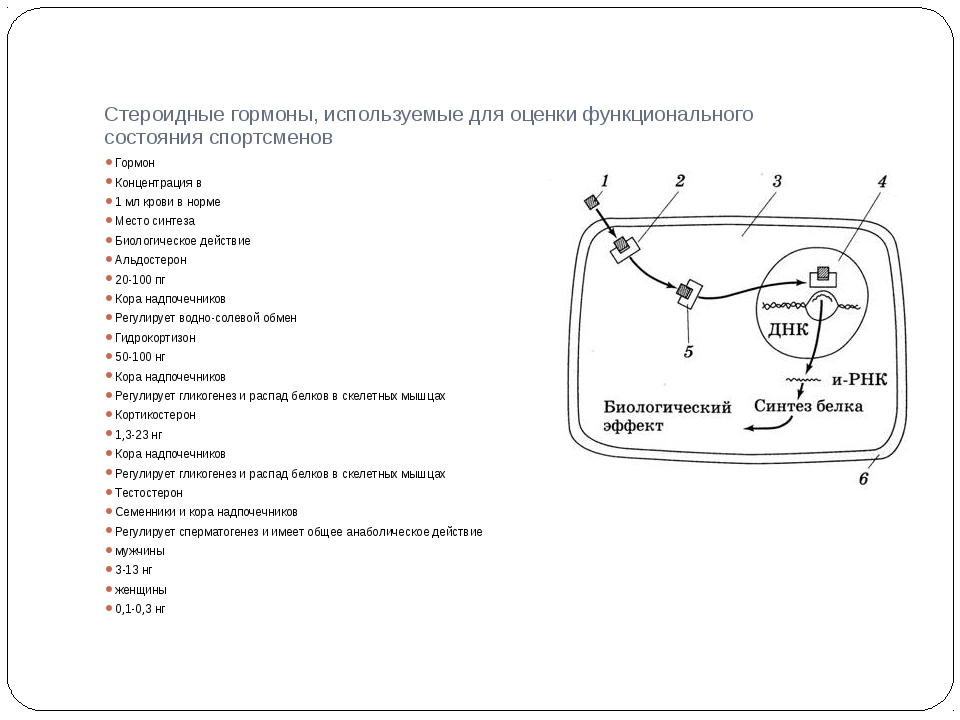 Стероидные гормоны, используемые для оценки функционального состояния спортсм...