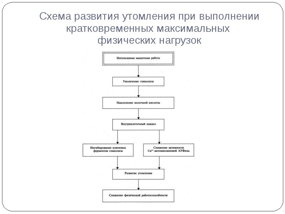 Схема развития утомления при выполнении кратковременных максимальных физическ...