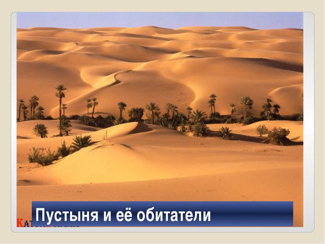 Пустыня Пустыня и её обитатели