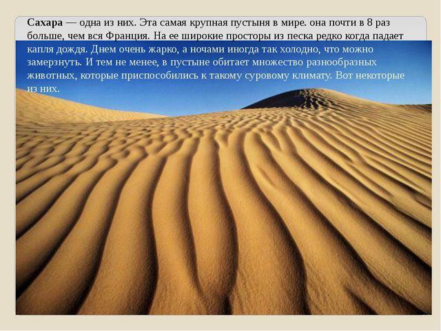 Сахара — одна из них. Эта самая крупная пустыня в мире. она почти в 8 раз бол...