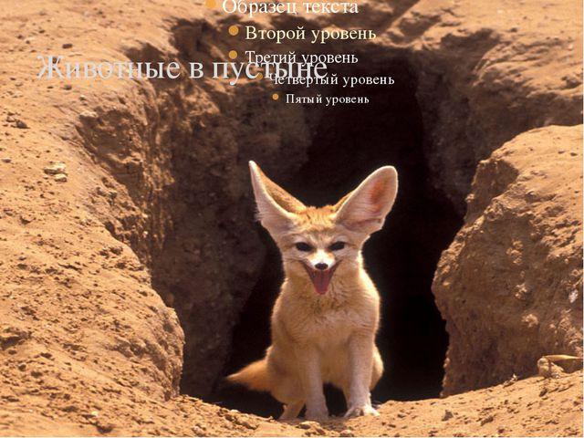 Животные в пустыне