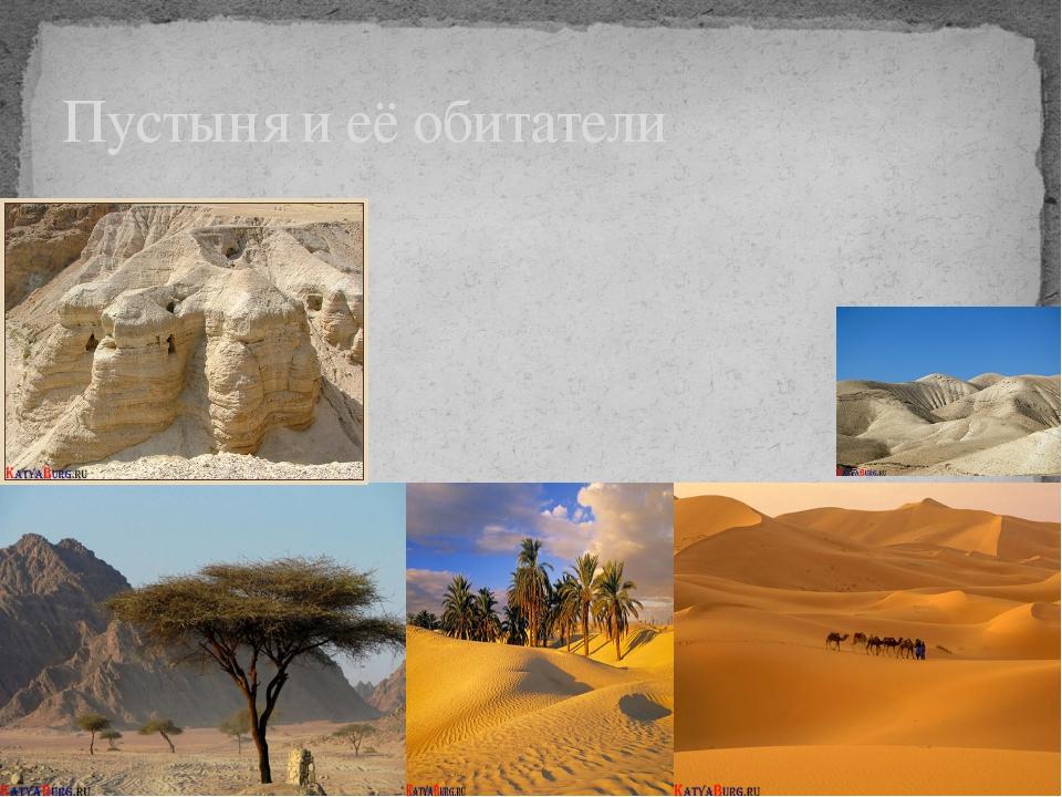Пустыня и её обитатели
