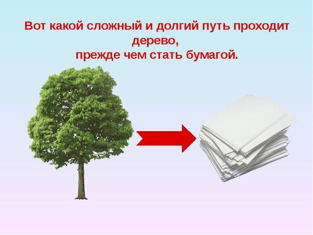 Вот какой сложный и долгий путь проходит дерево, прежде чем стать бумагой.