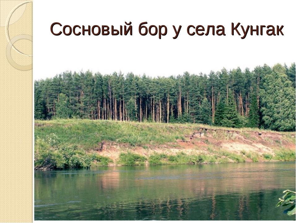 Сосновый бор у села Кунгак