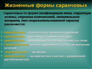 Жизненные формы саранчовых Саранчовые по форме (конфигурация тела, структура