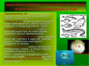 Зависимость формы тела рыб со способом и скоростью их передвижения в воде Тор