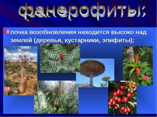 почка возобновления находится высоко над землей (деревья, кустарники, эпифит