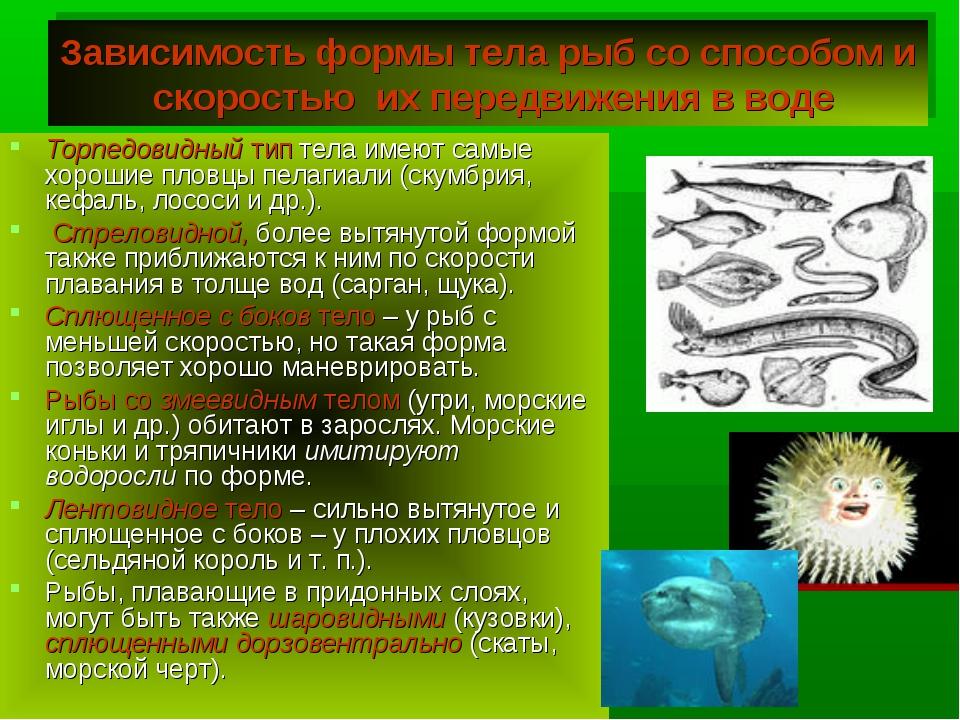 Зависимость формы тела рыб со способом и скоростью их передвижения в воде Тор...