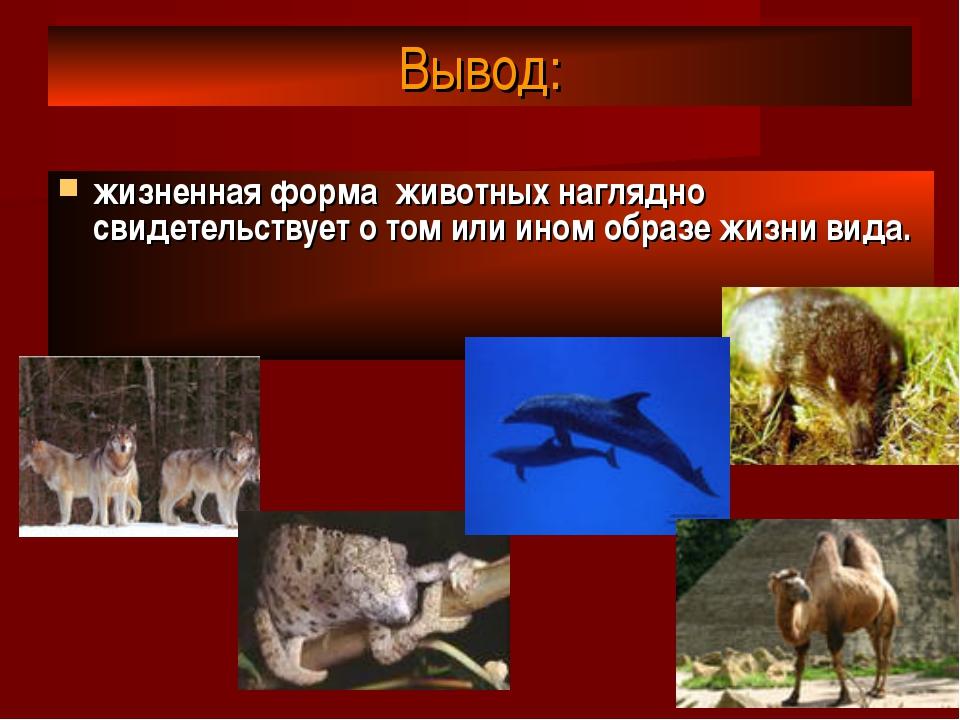 Вывод: жизненная форма животных наглядно свидетельствует о том или ином образ...