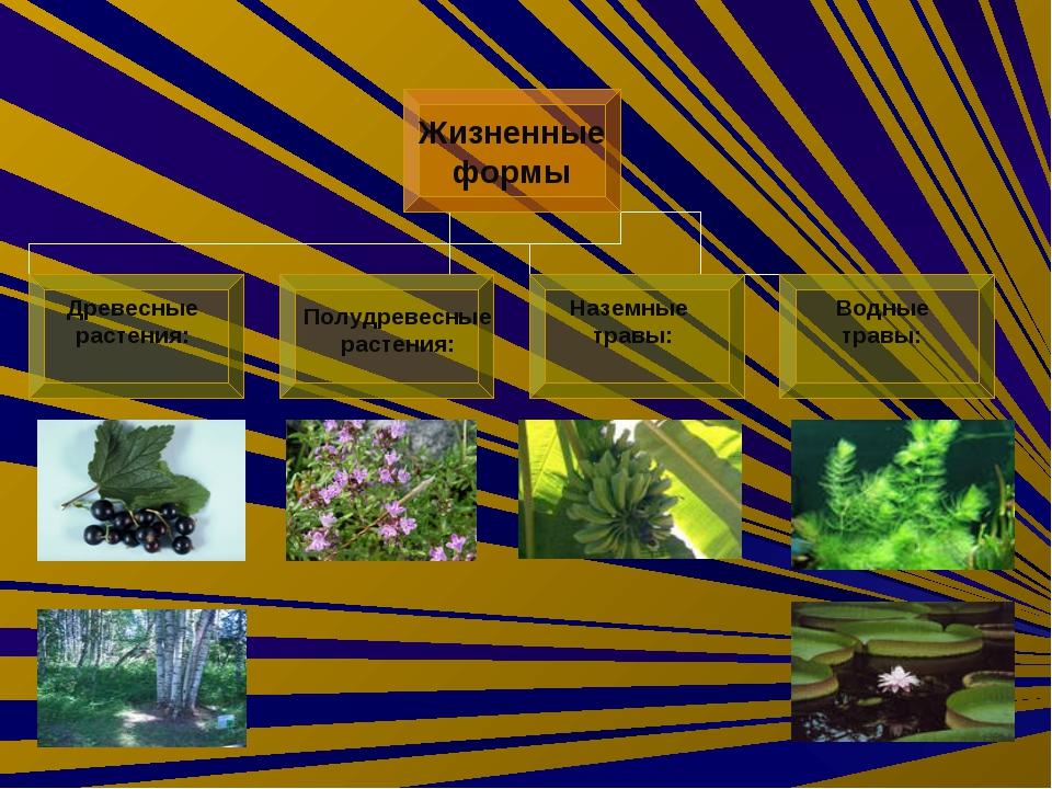 Древесные растения: Наземные травы: