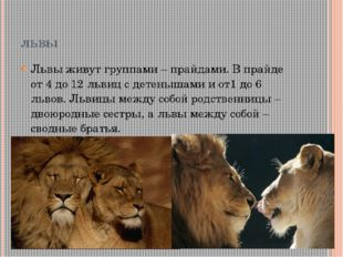 львы Львы живут группами – прайдами. В прайде от 4 до 12 львиц с детенышами и