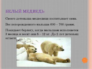 БЕЛЫЙ МЕДВЕДЬ Своего детеныша медведица воспитывает сама. Вес новорожденного