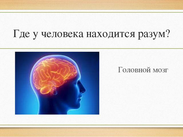 Где у человека находится разум? Головной мозг