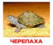 http://im6-tub-ua.yandex.net/i?id=245075456-15-72&n=21