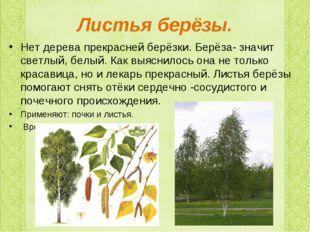 Листья берёзы. Нет дерева прекрасней берёзки. Берёза- значит светлый, белый.
