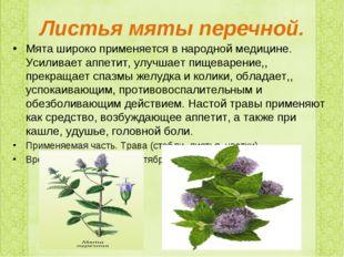 Листья мяты перечной. Мята широко применяется в народной медицине. Усиливает