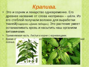 Крапива. Это и сорняк и лекарство одновременно. Его древнее название от слова