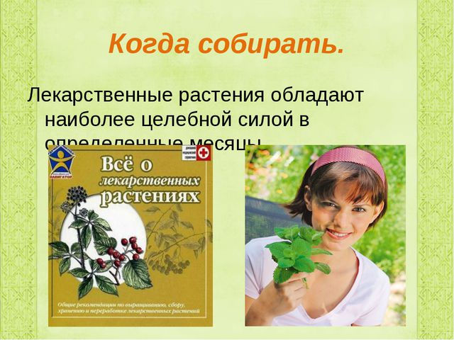 Когда собирать. Лекарственные растения обладают наиболее целебной силой в опр...