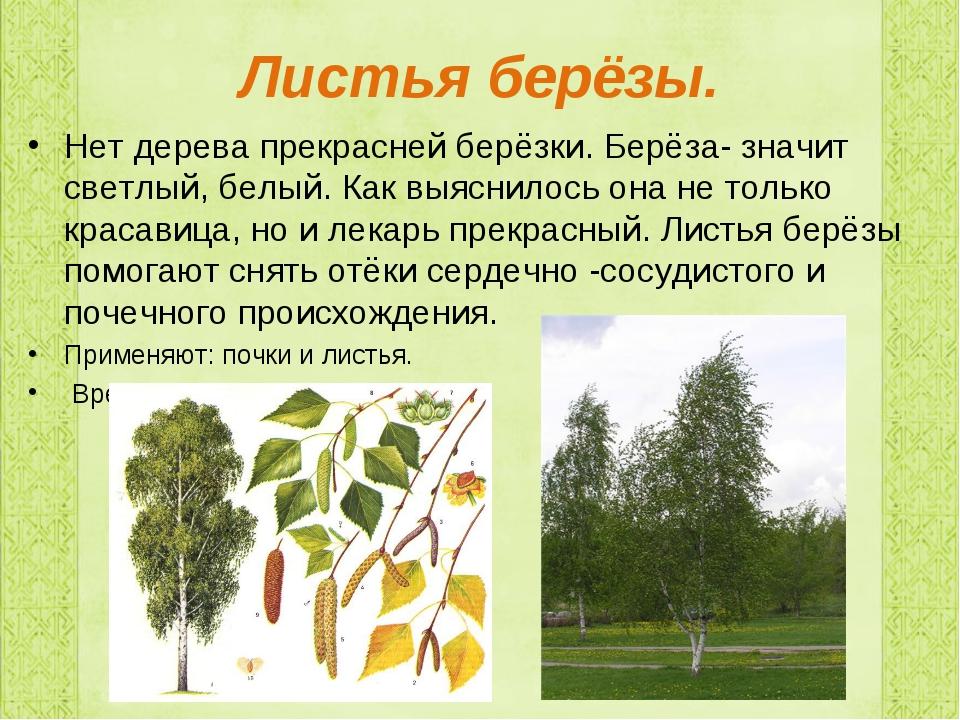 Листья берёзы. Нет дерева прекрасней берёзки. Берёза- значит светлый, белый....