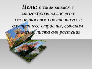 Цель: познакомимся с многообразием листьев, особенностями их внешнего и внутр