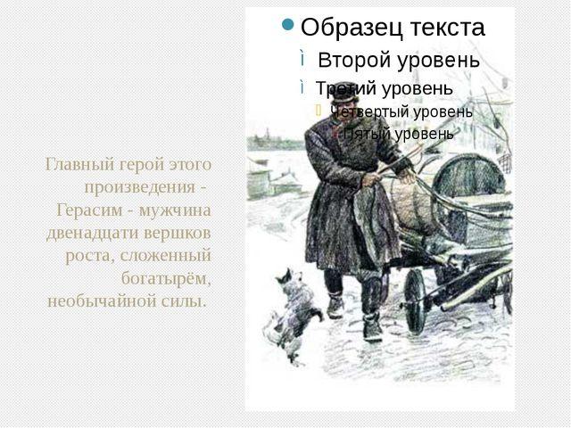 Главный герой этого произведения - Герасим - мужчина двенадцати вершков роста...