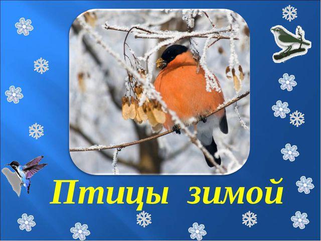 Птицы зимой
