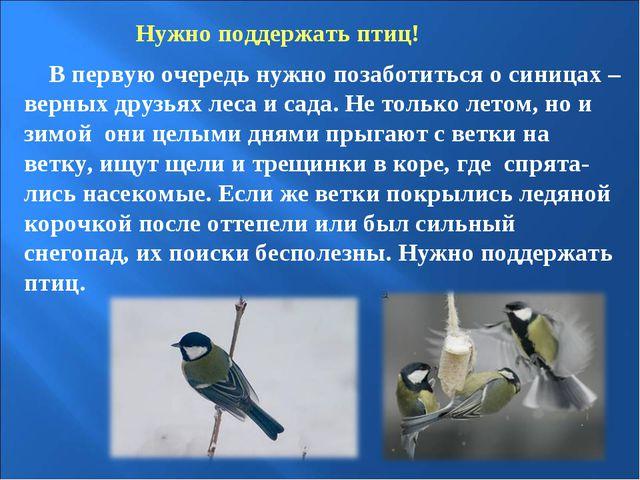 Нужно поддержать птиц! В первую очередь нужно позаботиться о синицах – верных...