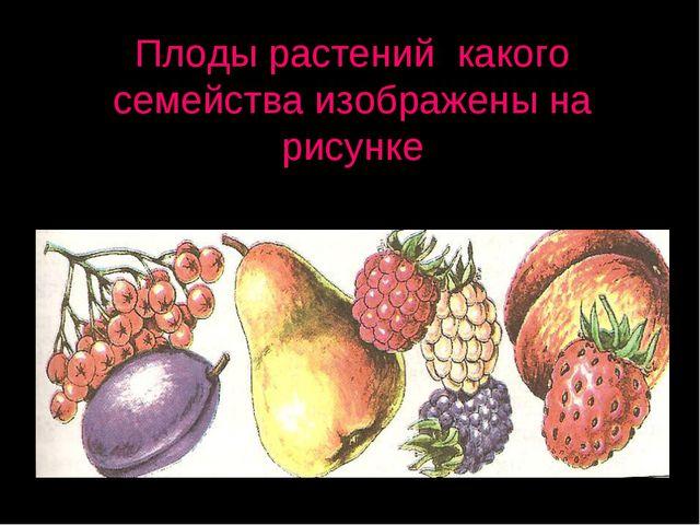 Плоды растений какого семейства изображены на рисунке