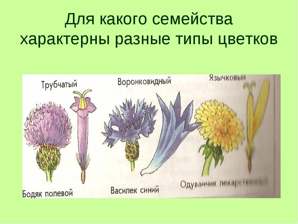 Для какого семейства характерны разные типы цветков