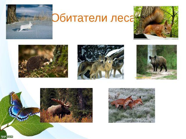 Обитатели леса