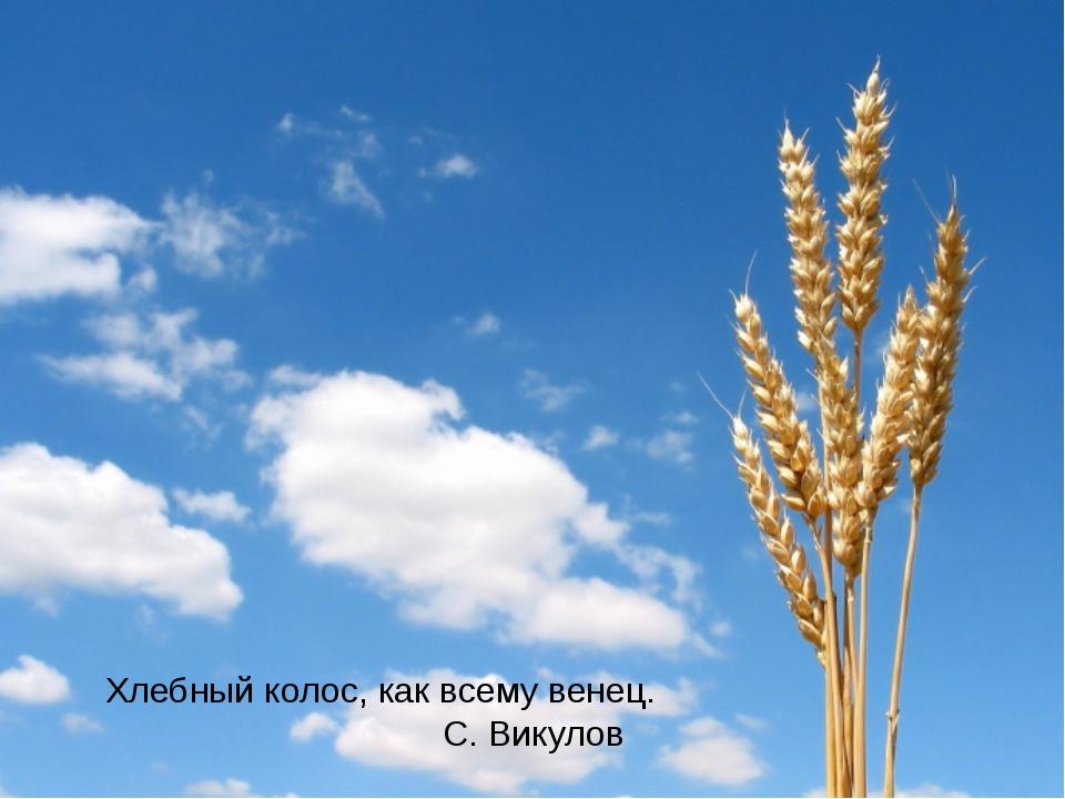 Хлебный колос, как всему венец. С. Викулов