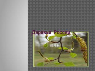 Деревья России БЕРЁЗА