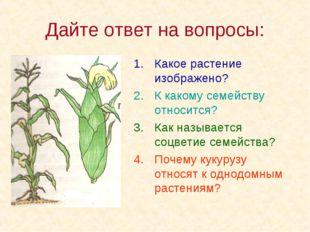 Дайте ответ на вопросы: Какое растение изображено? К какому семейству относит