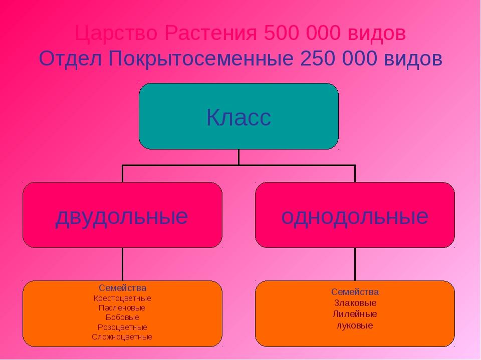 Царство Растения 500 000 видов Отдел Покрытосеменные 250 000 видов