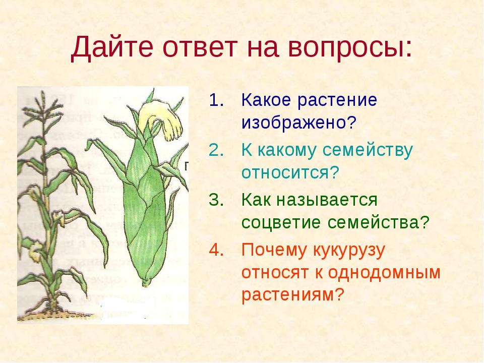 Дайте ответ на вопросы: Какое растение изображено? К какому семейству относит...