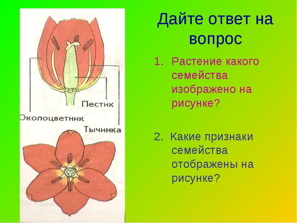 Дайте ответ на вопрос Растение какого семейства изображено на рисунке? 2. Как...