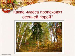 Какие чудеса происходят осенней порой?