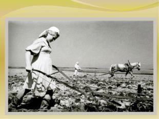 Помощь детей на колхозных полях