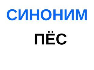 СИНОНИМ ПЁС