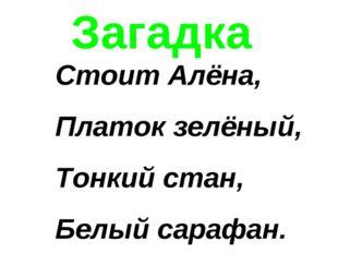 Загадка Стоит Алёна, Платок зелёный, Тонкий стан, Белый сарафан.