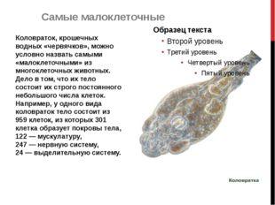 Коловраток, крошечных водных «червячков», можно условно назвать самыми «малок