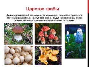 Царство грибы Для представителей этого царства характерно сочетание признаков
